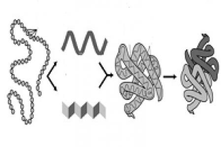 Comment piloter la structuration des protéines dans les aliments ?