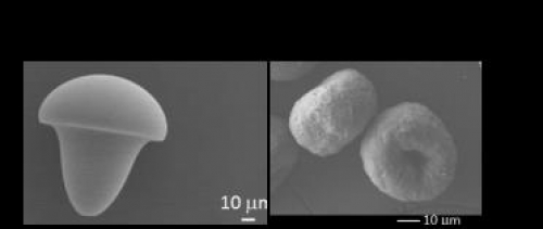 Microgel morphologie champignon ou beignet