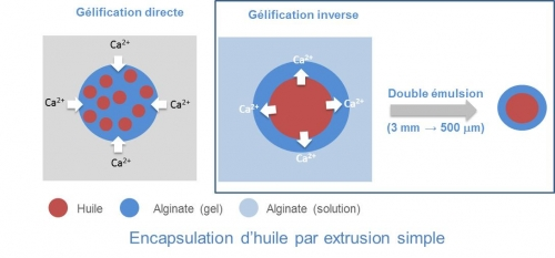 gelification inverse
