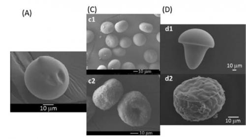 microgel biomimétique