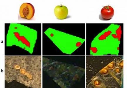 Les polymères de la peau des fruits