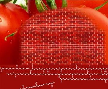 Puzzle structural sur la peau des fruits