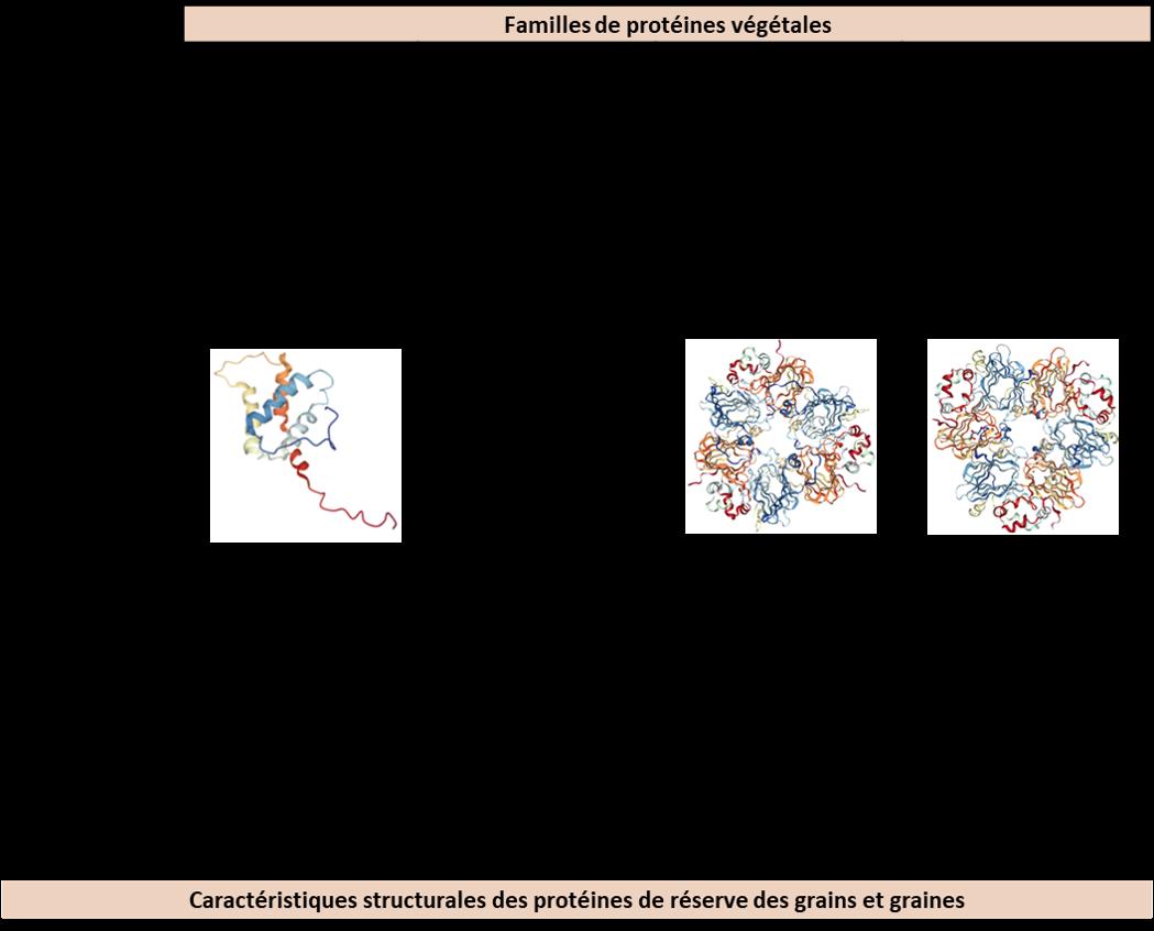 Familles de protéines végétales