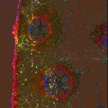 cellules des parois