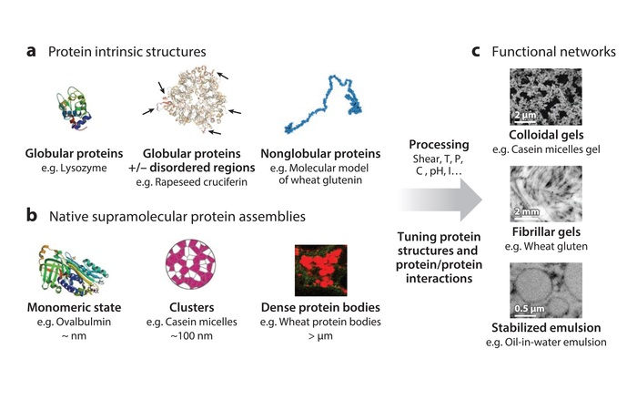 How soft matter concepts can help control protein structure © Paul Menu