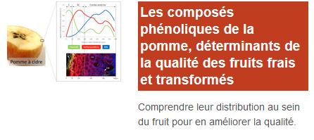 Les-composes-phenoliques