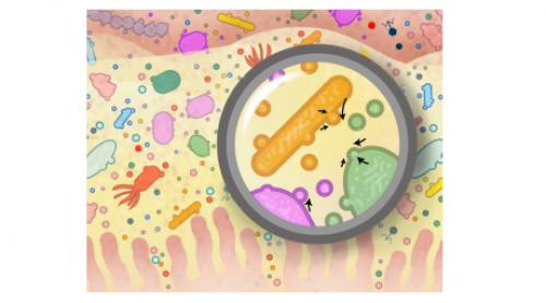 Découvrez comment notre environnement impacte l'évolution de notre microbiote