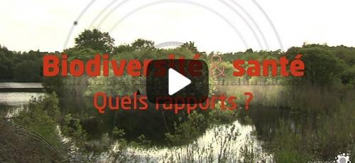 Biodiversité et santé : quels rapports ?