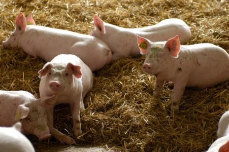 Concilier écologisation et compétitivité de l'élevage