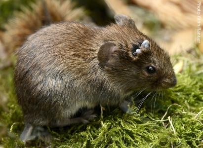 Les micro-mammifères, les tiques et les paysages agricoles