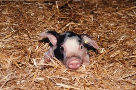 SANT'Innov : écologisation de l'élevage [PSDR4]
