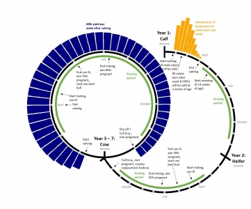 Schematic overview of herd management in a typical Irish spring calving dairy herd.