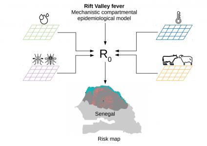 Highlights  2020: The risk of a Rift Valley Fever epidemic in Senegal