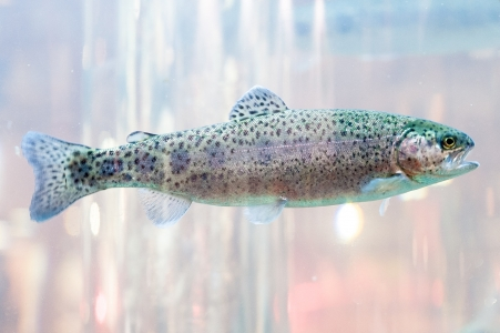 APPIfish