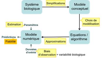 Les sources d'incertitudes (en jaune) dans le processus de modélisation