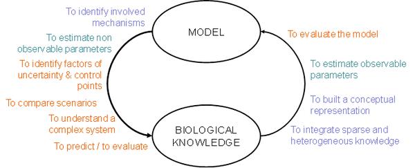 Le processus de modélisation