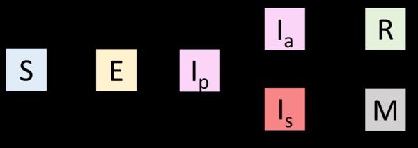Schéma de modélisation incluant une phase de latence