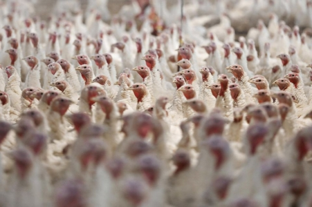 intensive farming and zoonoses