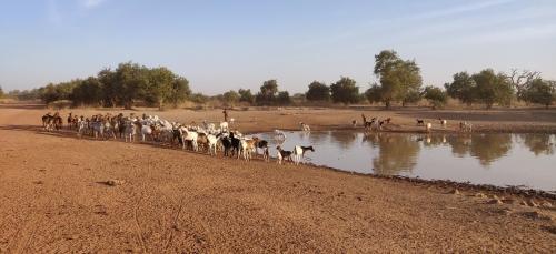Faits marquants 2020: Un partenariat avec le Sénégal renouvelé en épidémiologie animale