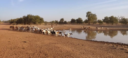 Highlights 2020: A renewed partnership with Senegal in animal epidemiology