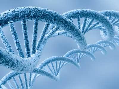 Le séquençage de 7 génomes de trois espèces de Babesia