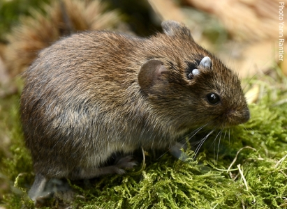 Micro-mammals, ticks and agricultural landscapes