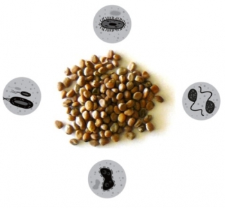 lutte biologique contre les agents pathogènes au sein des graines