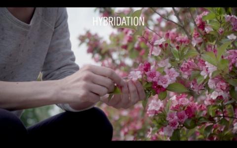 Vidéo sur la création variétale ornementale