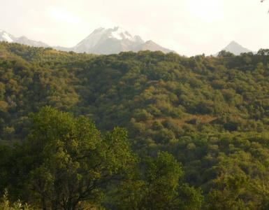 Zone d'échantillonnage des pommiers sauvages dans le Tien Shan (Kazakhstan). En arrière-plan, le mont Talgar