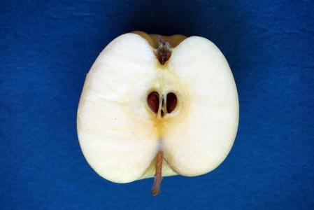 texture de la pomme