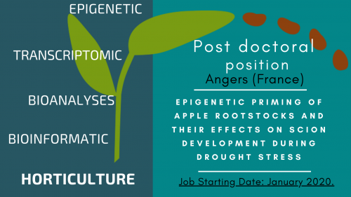 Post doctoral position