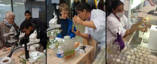 Atelier culture in vitro
