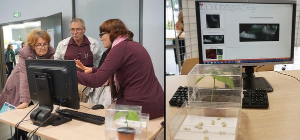 Atelier bactéries sur haricot