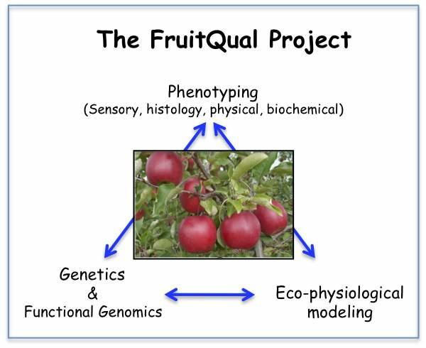Project Fruitqual