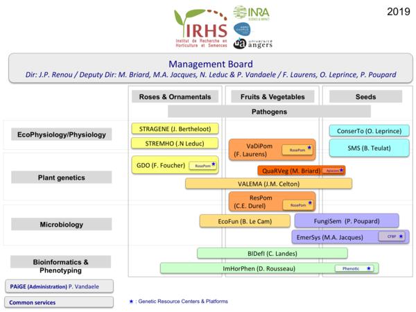 Organogramme IRHS 2019