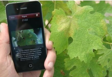 ReVeRies : Reconnaissance de végétaux récréative, interactive et éducative sur smartphone