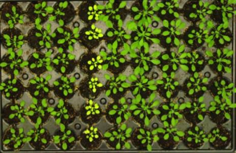 Un nouvel outil pour l'amélioration des plantes