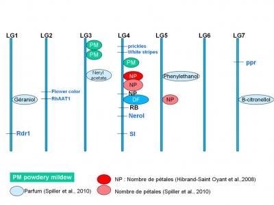 Bases génétiques et moléculaires