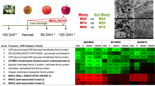 Functional genomics of fruit quality