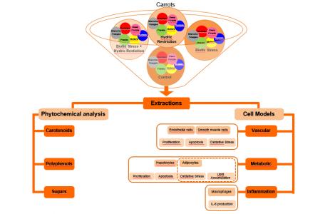Impact de la sélection pour la résistance sur la qualité nutritionnelle et impact sur santé humaine