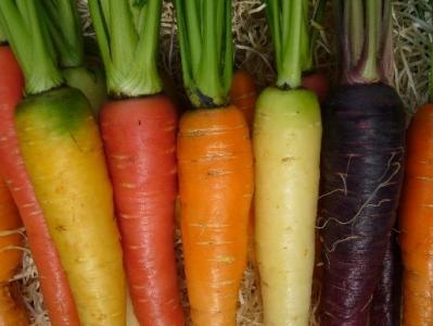 valorisation des ressources génétiques (projets Carrot diverse et EVAcarrot)
