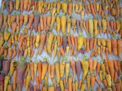Population non structurée pour étude de génétique d'association chez la carotte