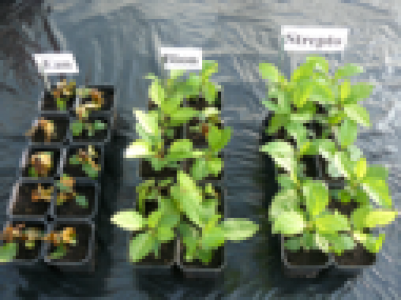 Stimulateurs de Défenses des Plantes