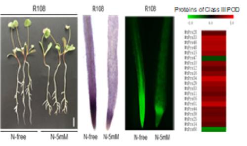 Nitrate perception & Signalling