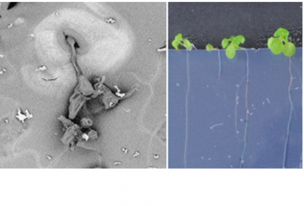 Metabolism and performance of seedlings in interaction with biotic environment