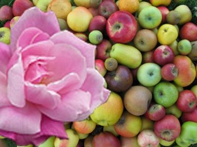 Fruits à pépin et rosiers