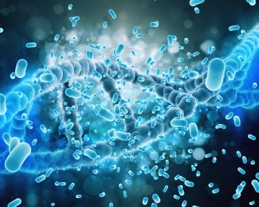 Physiologie et Pathologie des barrières : interaction avec les microbiotes