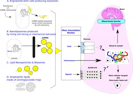 Sources d'exosomes et conception de véhicules biomimétiques. Les voies d'inoculation ont pour objectifs (1) de minimiser le caractère envahissant, (2) de cibler une administration spécifique à une cellule (cellules intestinales ou bêta-pancréatiques) ou à un tissu (cerveau, par exemple).